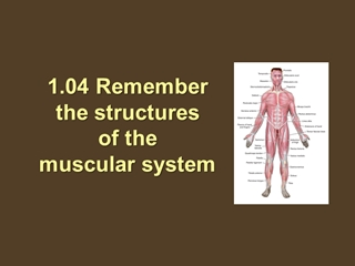 04 Remember the structures of the muscular system, 04 Remember,