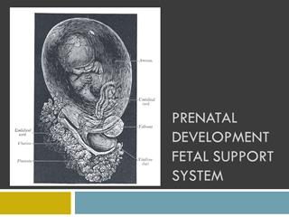 Prenatal Development - Labor& Delivery,