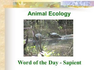Ch2 - Animal Ecology, Word of the Day - Sapient, The Hierarchy of Ecology,