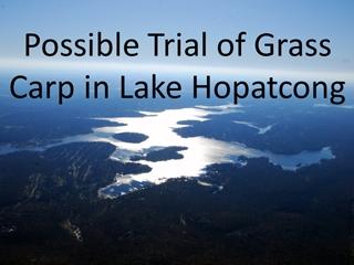 GrassCarp - Possible Trial of Grass Carp in Lake Hopatcong, Triploid Grass Eating Carp Digital slide making software