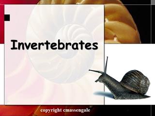 Invertebrates - Mesa Public Schools Digital slide making software