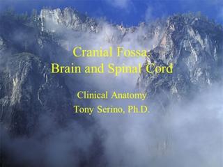 CNS - Misericordia University - Cranial Fossa:Brain and Spinal Cord, Clinical Anatomy Tony Serino,